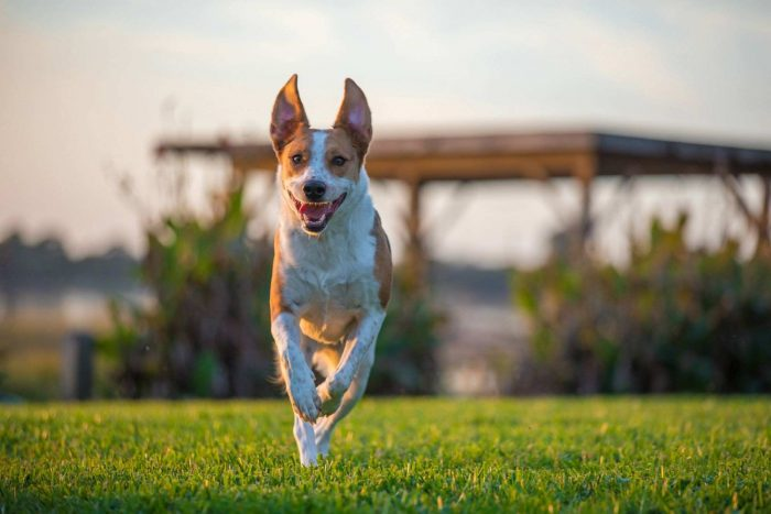 Wireless Dog Fences 2020 Guide Hi Boox